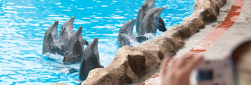 animaux Marineland